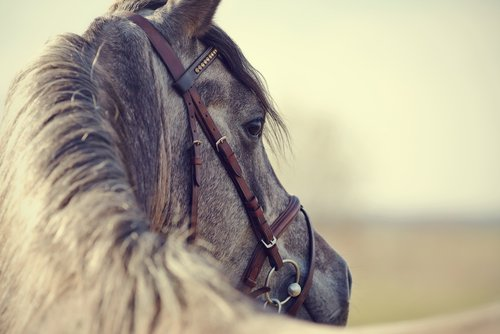 Equine Law in Ohio