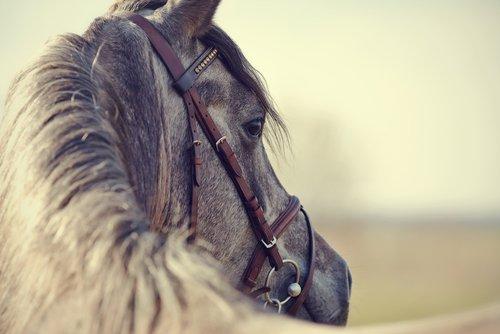 Equine Law in Ohio
