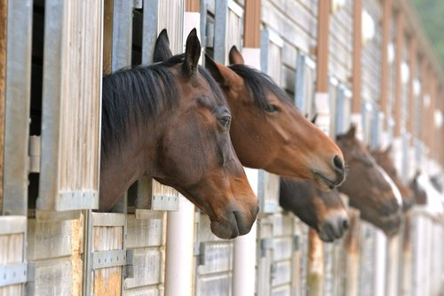 Stable Owner Liens